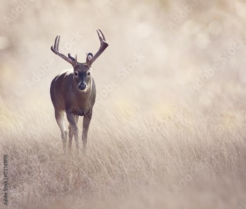 Deer in a grassland - 175361805