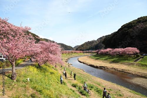 Fotobehang Kersen Cherry blossom in Kawazu, JAPAN.