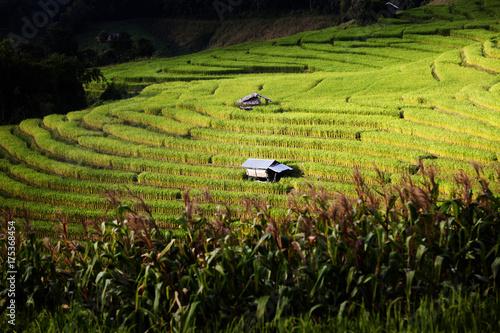 In de dag Rijstvelden Rice Terrace, Chiang Mai, Thailand