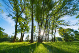 Sunlight through the trunks of trees. Morning in the summer park - 175374835