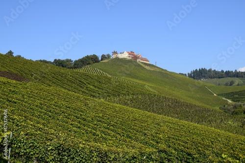 Póster Weinberg in Hanglage bei Durbach in der badischen Weinregion, Ortenau  Schloss S