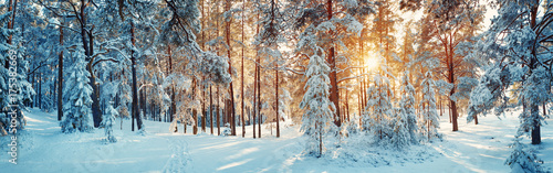 Pine trees covered with snow on frosty evening. Beautiful winter panorama - 175382669