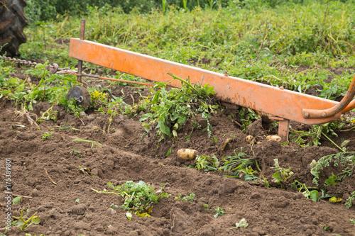 Fotobehang Trekker Culture de pommes de terre