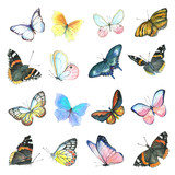 A collection of drawings of a butterfly handmade made in watercolor. - 175390209