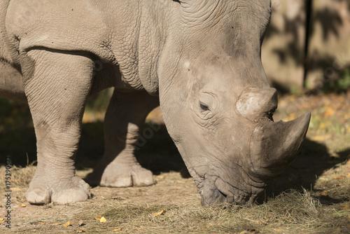 Fotobehang Neushoorn Rhino 2