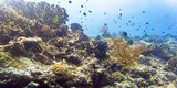 Coral reef and fish in tropical sea underwater as a landscape