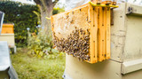 Honeycombs with bees hanging outside of beehouse in a garden - 175397626