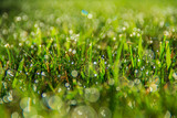 Morning Grass with Dew - 175399209