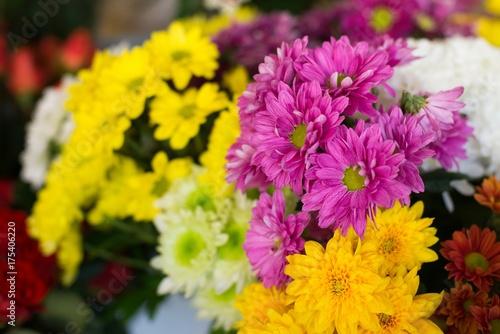 Aluminium Gerbera Beautiful violet and yellow gerbera daisies