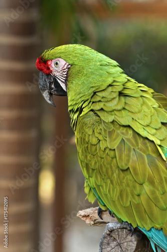 Aluminium Papegaai Parrot On A Limb