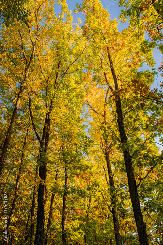 Papiers peints Automne Beautiful autumn forest with yellow and red trees at sunset
