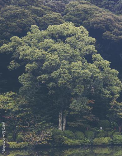 tropical forest in Japan, vintage filter image - 175421807