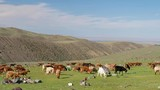 Goats graze on steppe pasture in natural mountain boundary Tsagduult, western Mongolia - 175424452