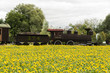 Sunflowers and train made by plants 2