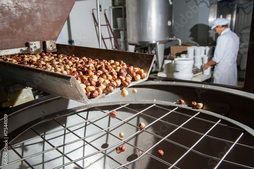 The processing of dry fruit: just shelled hazelnuts falling on a metal basin for the making process hazelnut cream