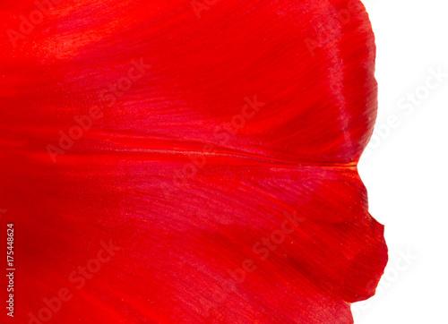 Foto Murales Flower petal as background