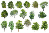 Collection Of Trees Isolated On White Background, Tropical Trees Isolated Used For Design, Advertising And Architecture. - 175454480