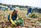 Working on farm - 175455004