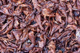 Dry wet leaves on the floor background. - 175455259
