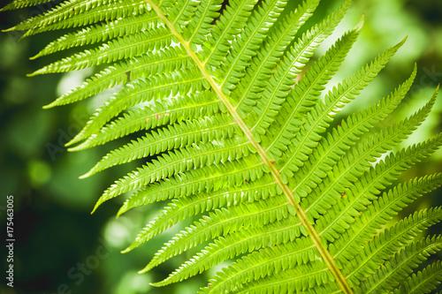 Bright green fern leaf fragment Poster