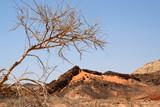 Arid landscape in Negev desert. - 175473040