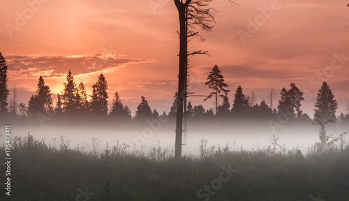 Foto op Canvas Zee zonsondergang Autumn fog at misty field near the dark forest under the red sunrise. Lonelly hight tree at the center of the picture