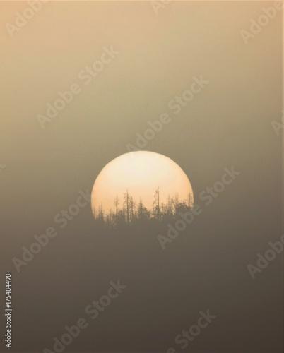 Fotobehang Zonsopgang Foggy Sunrise Treeline Silhouette