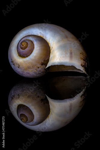 Seashell Reflections 2 Poster