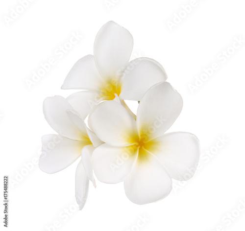 Fotobehang Plumeria Tropical flowers frangipani (plumeria)