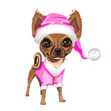 little dog in a pink Santa Claus hat