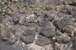 Rocky lichen