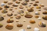Conchiglie sulla spiaggia  - 175506072