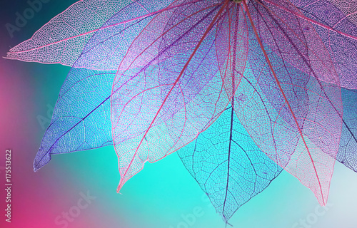 Macro leaves background texture blue, turquoise, pink color. Transparent skeleton leaves. Bright expressive colorful beautiful artistic image of nature.