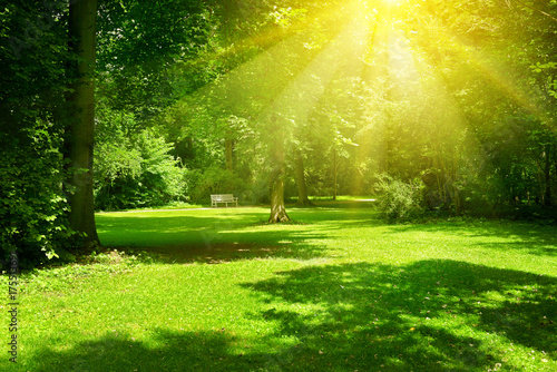 Papiers peints Vert chaux Bright sunny day in park. The sun rays illuminate green grass