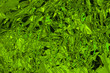 Grüne metallische Folie