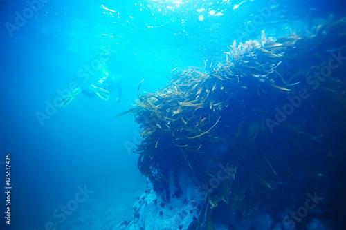 Foto op Canvas Turkoois underwater landscape