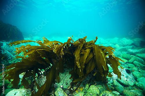 Poster Turkoois underwater landscape