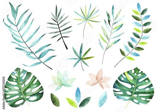 Kolekcja roślin tropikalnych. Elementy akwarela. Kolekcja zawiera tropikalne liście i gałęzie. Idealny dla Ciebie projekt pocztówki, zaproszenia, projekty, karta ślubna, plakat.