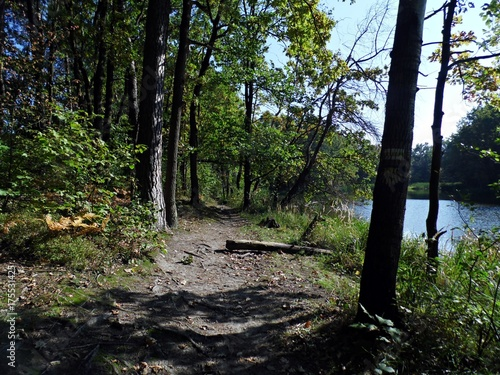 Keuken foto achterwand Weg in bos Droga leśna