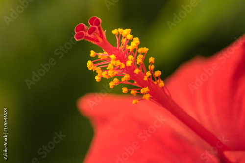 Extreme close up of a colourful flower stamen and stigma. Poster