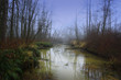 a picture of an Pacific Northwest forest and wetlands i winter