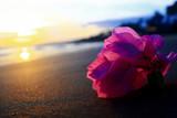 Flower on a sandy beach - 175567407