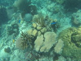 fond sous marin