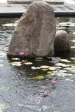 Japanese garden in the center of the city.  - 175570857