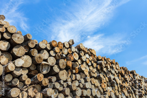 Tuinposter Brandhout textuur Timber stacked