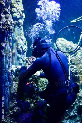 Diver maintaining the coral in aquarium Poster