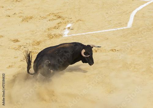 Staande foto Stierenvechten Toro bravo español en la arena de una plaza de toros