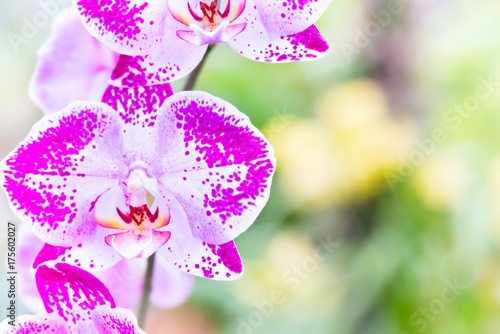 Fotobehang Purper Purple orchids in a tropical forest