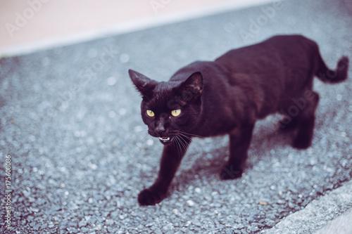 Fotobehang Kat 黒猫