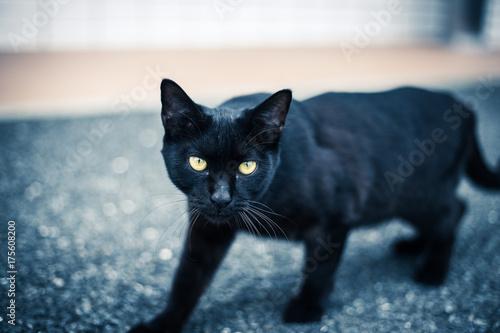 黒猫 Poster